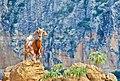 Bode posando para foto no Vale do Catimbau.jpg