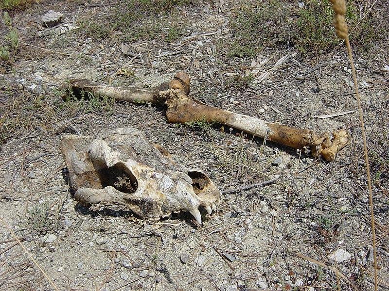 File:Bones at Gran Mondo - panoramio.jpg
