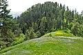 Borjomi NP, above Atskuri.jpg