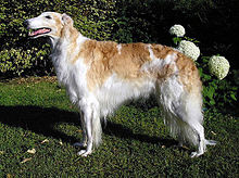 Gifts for Borzoi Dog Lovers