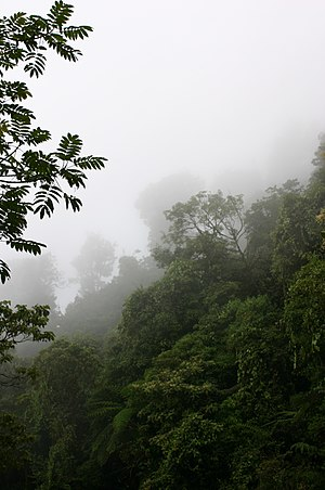 Sierra Madre de Oaxaca pine-oak forests - The communal land of the Chinantec Community of Santiago Comaltepec contains cloud forest.