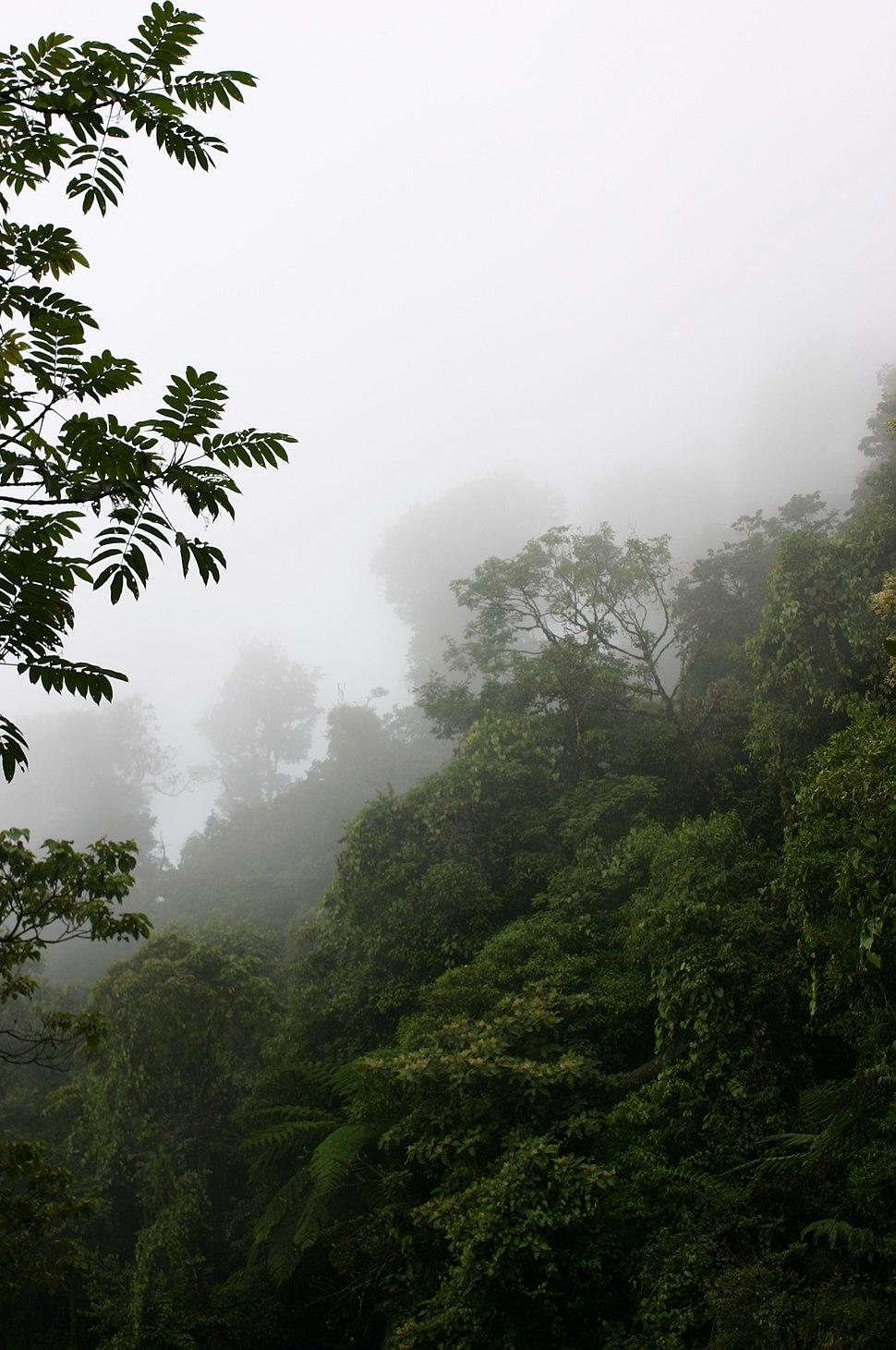 Bosque Comaltepec
