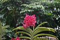 Botanical Garden Singapore 2017 (27474497239).jpg