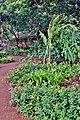 Botanical Gardens Kauai, Hawaii - panoramio (9).jpg