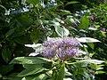 Botanical garden in zugdidi(26).jpg
