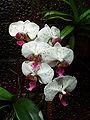 Botanická zahrada Tábor - orchidej2.jpg