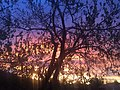 Boulder sunrise.jpg