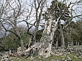 Bovagli kailyards in Glen Girnoc - geograph.org.uk - 253135.jpg