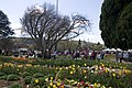 Bowral NSW 2576, Australia - panoramio (10).jpg