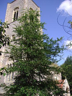 Bradfield, Norfolk - Image: Bradfield Parish Church 1st September 2008 (5)