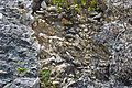 Breccia-filled dissolution pit (Sandy Point Northeast roadcut, San Salvador Island, Bahamas) 6 (16282301669).jpg