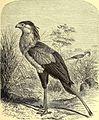 Brehms Tierleben - allgemeine Kunde des Tierreichs - mit 1800 Abbildungen im Text, 9 Karten und 180 Tafeln in Farbendruck und Holzschnitt (1892) (20226602130).jpg