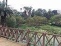 Bridge in Orman garden.jpg