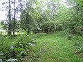 Bridleway, Stockton Wood, Stockton - geograph.org.uk - 531410.jpg