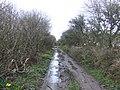 Bridleway east - geograph.org.uk - 367318.jpg