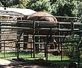Brijuni, Safaripark, Bild 2.jpg