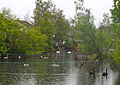 Broughshane Wild Life Pond.JPG