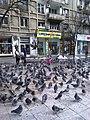 Bucuresti, Romania. Porumbei, porumbei...In plin Centrul Bucurestiului.jpg