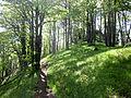 Bukovy les starhrad.jpg