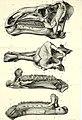 Bulletin du Musée royal d'histoire naturelle de Belgique; Medeelingen van het Koninklijk Natuurhistorisch Museeun van België (1883) (20431095302).jpg