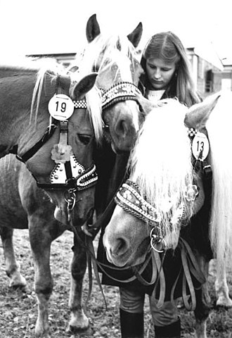 Haflinger - Haflinger mares in Germany in the mid-1980s