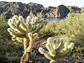 Butcher Jones Trail - Mt. Pinter Loop Trail, Saguaro Lake - panoramio (54).jpg
