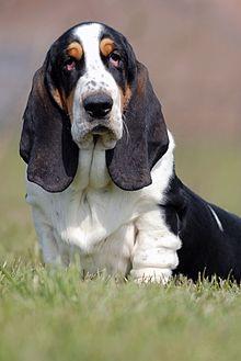 Longest Dog Ears