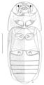 COLE Nitidulidae Amorotubus clarkei 2.png