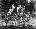 COLLECTIE TROPENMUSEUM Een groep mensen vangt een krokodil die een familielid heeft gedood TMnr 10006474.jpg