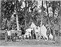 COLLECTIE TROPENMUSEUM Een landmeter aan het werk in de Bataklanden. TMnr 60001808.jpg