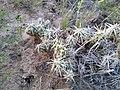 Cacti in NM.jpg