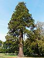 Campagne (24) château parc sequoia.JPG
