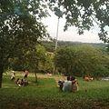 Campo tranquilo.jpg