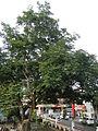 Candelaria,Quezonjf1860 09.JPG