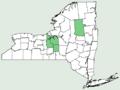 Carex capillaris NY-dist-map.png