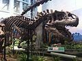 Carnegie Allosaurus.jpg