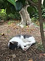 Cat sleeping under tree.jpg