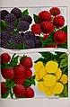 Catalogue - fruit, ornamental trees, shrubs, roses, bulbs, etc. (1902) (20379712050).jpg