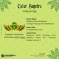 Catur Sagotra - Kadipatèn Pakualaman.png
