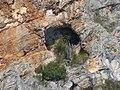 Caverna - panoramio (1).jpg