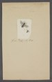Ceratina - Print - Iconographia Zoologica - Special Collections University of Amsterdam - UBAINV0274 045 07 0016.tif