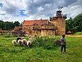 Château du Guédelon, fin mai 2014, des moutons, un enfant.jpg