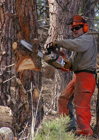 Chainsaw safety clothing - A man cutting while wearing helmet, goggles, ear defenders, gloves, chaps, and boots