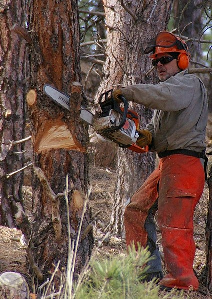 File:Chainsaw cutting tree.jpg