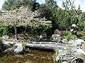 Cherry Blossom and bridge in Miyazu Park, Nelson.jpg