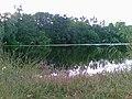 Chervone, Sums'ka oblast, Ukraine, 42353 - panoramio.jpg