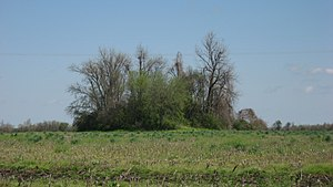 National Register of Historic Places listings in Mississippi County, Arkansas - Image: Chickasawba Mound