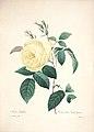 Choix des plus belles fleurs (Plate 81) (7851470352).jpg