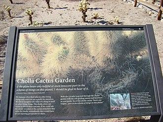 Cylindropuntia bigelovii - Image: Cholla Cactus Garden Nature Trail information display at Joshua Tree National Park