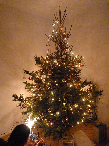Image for Live Christmas Trees For Sale